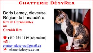 Chatterie DésyRex