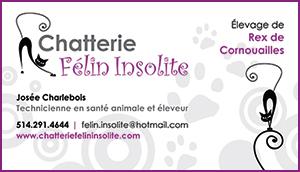 Chatterie Félin Insolite - Élevage de Rex de Cornouailles
