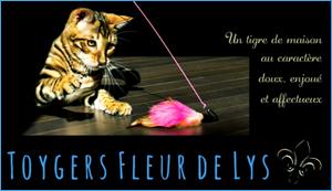 Elevage - Chatterie Fleurdelys