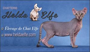 Chatterie Heldaelfe - élevage d'Elfe