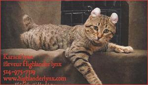 Karacal Lynx