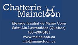 Chatterie Maincloon - Élevage familial de Maine Coon