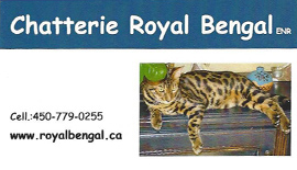 Breeder - Chatterie Royal Bengal