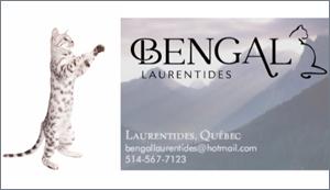 Elevage - Bengal Laurentides