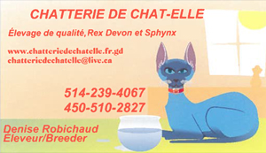 Chatterie-chat-elle