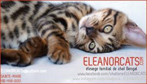 Elevage - Eleanorcats