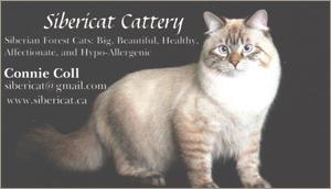 Sibericat Cattery